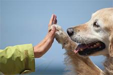 ヒトとイヌのセミナーイベントイメージ