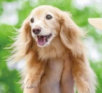 第二回ヒトとイヌのための美容セミナーイベントイメージ